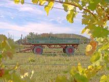 En vingård i nedgång Arkivfoto
