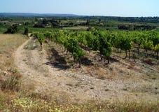En vingård och en pelare av kraftledningar Arkivbild