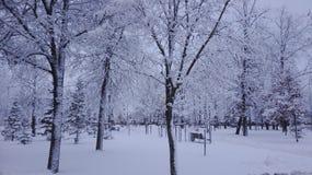 En vinter är rolig Royaltyfri Foto