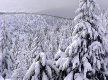 en vinter Arkivfoton