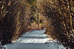 En vinter som fotvandrar slingan i Kanada Royaltyfri Fotografi