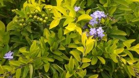 En Violet Flower Very Sinny arkivfoton