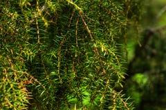 en visare Skog Fotografering för Bildbyråer