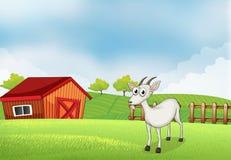 En vit get på lantgården royaltyfri illustrationer