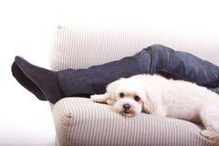 En vit hund arkivbild