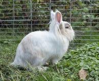 En vit kanin i trädgården arkivfoton