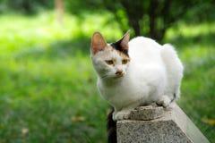 En vit katt, en katt Royaltyfria Bilder