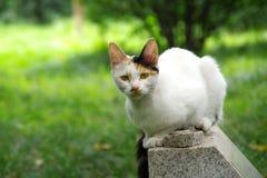 En vit katt, en katt Royaltyfri Fotografi