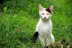 En vit katt, en katt Fotografering för Bildbyråer