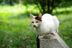 En vit katt, en katt Arkivfoton