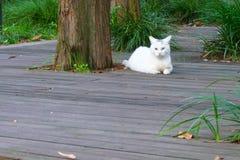 En vit katt lägger bredvid ett träd Arkivbilder
