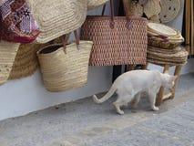 En vit katt som passerar av en shoppa av sugrör, hänger löst framme i Andalusia, Spanien Royaltyfri Fotografi