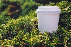 En vit kopp av svart kaffe eller te på naturbakgrunden Royaltyfri Fotografi