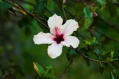 En vit och en rosa färg blommar i en trädgård Royaltyfria Foton
