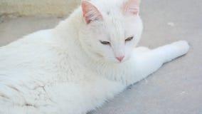 En vita Cat Outside fotografering för bildbyråer