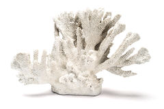 En vita dekorativa Coral Over en vit bakgrund Royaltyfri Foto