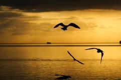 En vol Photo libre de droits