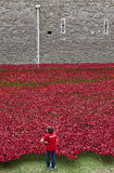 En volontär på tornet av London Poppy Installation Royaltyfri Fotografi