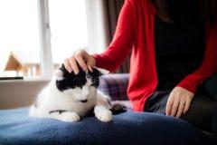 En vresig katt som slås av en dam arkivfoto