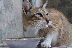 En vresig och gullig katt arkivbilder