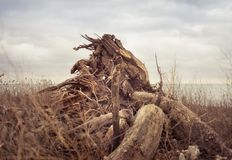 En vulten stubbe i ett gräs- fält arkivbild