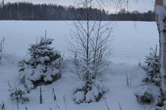 En winterday Nice Royaltyfria Bilder