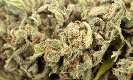 Cannabisbakgrund Royaltyfri Bild