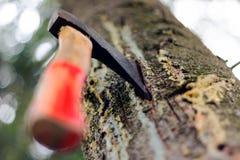 En yxa klibbas i ett träd i skogen Arkivbilder