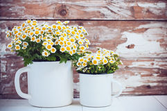 Enamel mugs with chamomile flowers. Two vintage enamel mugs with chamomile flowers on wooden background, cozy home rustic decor, cottage living royalty free stock photos