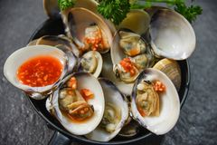Enamel venus shell cooking pan seafood plate with Shellfish Clams ocean gourmet dinner cooked. With herbs and spices chilli sauce on dark background stock image