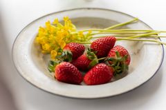 Enameled vintage plate with ripe strawberries and yellow flowers stock image