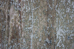 Enamelled wood. Texture of an old enamelled wood Royalty Free Stock Image