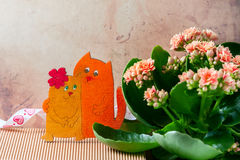 Enamoured cats, Valentine`s day. Pink kalanchoe flowers. royalty free stock image