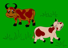 Enamoured cow and the bull. Passionate at one another ox and cow Stock Photography