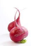 Enamoured radish stock photography