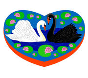 Enamoured swans. Royalty Free Stock Images
