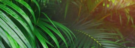 Encabeçamento do Web site e bandeira de folhas de palmeira e da luz do sol tropicais imagens de stock