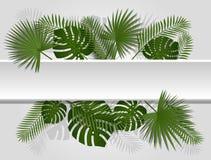Encabeçamento tropical do verão verde com folhas de palmeira e a planta exóticas Design floral do vetor na linha branca fundo ilustração do vetor