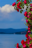 Encadré avec des roses Image libre de droits