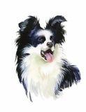 Encadrez l'illustration d'aquarelle de chien de Collie Animal d'isolement sur le vecteur blanc de fond Image libre de droits
