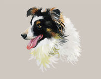 Encadrez l'illustration d'aquarelle de chien de Collie Animal sur le vecteur blanc de fond Photographie stock libre de droits
