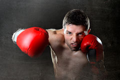 Encaixotamento agressivo do homem do pugilista nas luvas de combate que jogam o perfurador irritado do gancho direito Foto de Stock Royalty Free