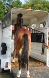 Encaixotando o cavalo Fotografia de Stock Royalty Free