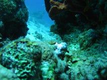 Encaixote peixes Fotos de Stock Royalty Free
