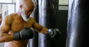Encajonamiento practicante del hombre mayor en el saco de arena 4k almacen de video
