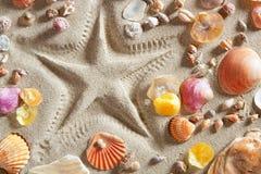 Encalhe a cópia branca dos starfish da areia muitos escudos dos moluscos Fotos de Stock Royalty Free