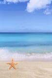 Encalhe a cena do fundo no verão em férias com estrela de mar Fotos de Stock Royalty Free
