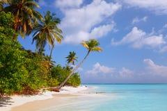 Encalhe na ilha Fulhadhoo de Maldivas com a praia e a palma perfeitas idílico arenosas brancas do mar e da curva fotos de stock royalty free