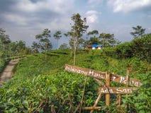 Encalhe o kebun do jardim de batea dos meninos o amor fresco impressionante pemandangan de Indonésia das nuvens Fotografia de Stock Royalty Free