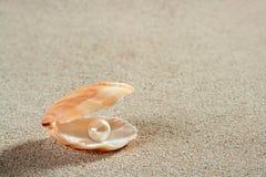 Encalhe o macro branco dos moluscos do escudo da pérola da areia Foto de Stock